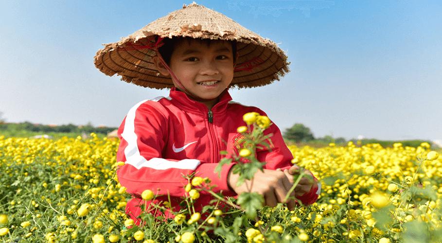 Trẻ em ra đồng hái Cúc thuê