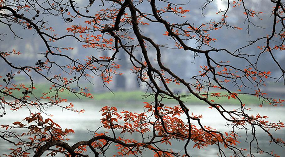 Mùa cây thay lá