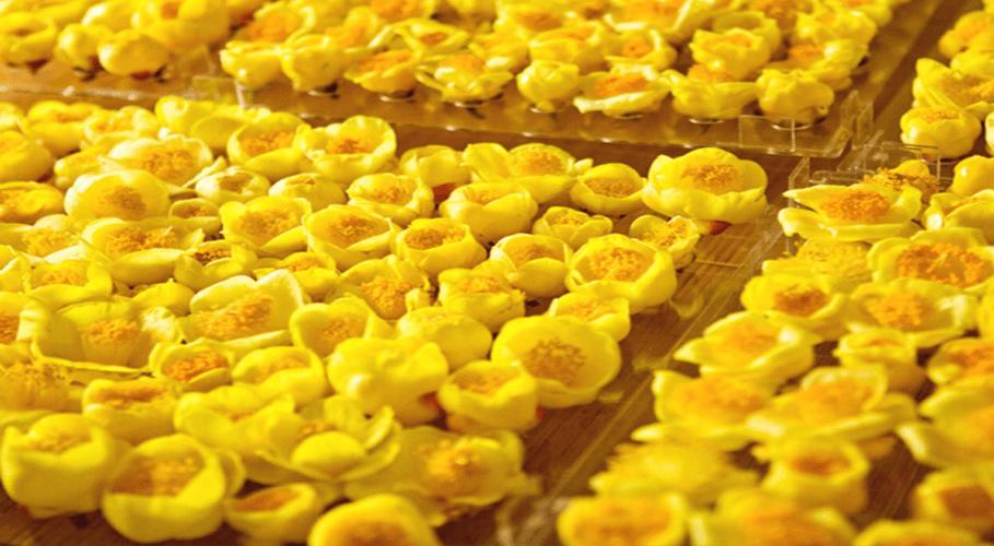 Trà hoa vàng Ba Chẽ, Quảng Ninh